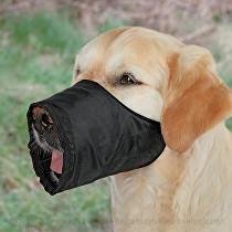 Náhubok fixačné pes Trixie M 1 ks